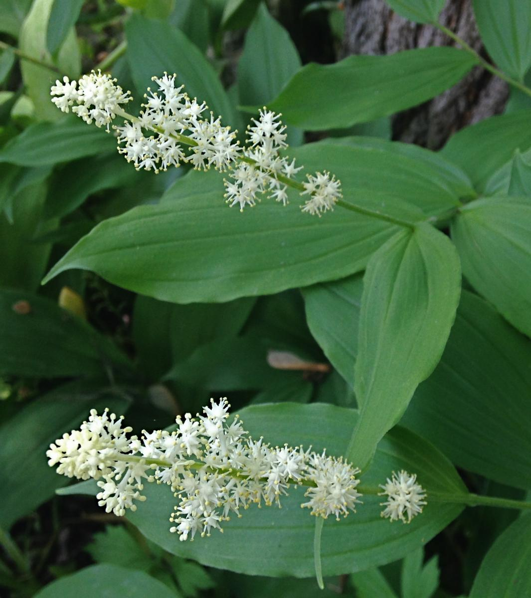 Gardening With Native Plants In Shady Evanston